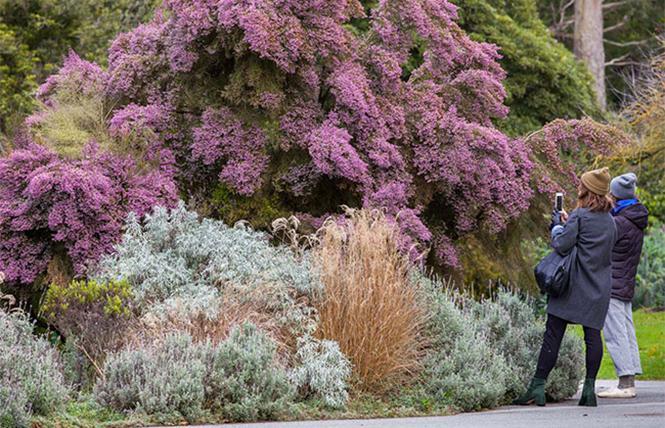 Plant Collections @ SF Botanical Garden Mon 7