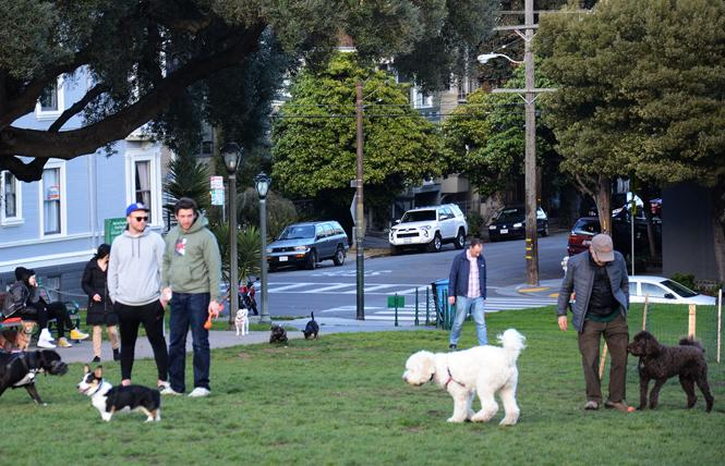 Readers continue to love walking their dogs in Duboce Park. Photo: Rick Gerharter