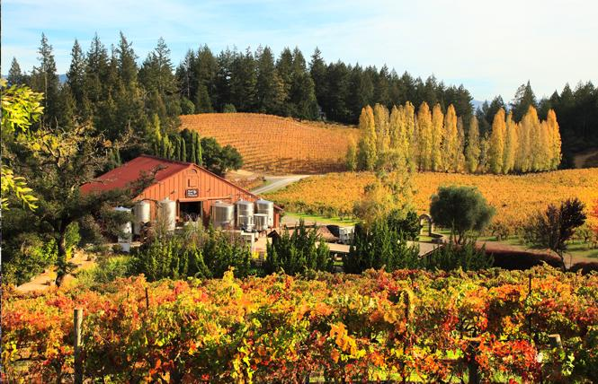 Harvest season in Healdsburg brings vibrant fall colors. Photo: Courtesy Healdsburg Chamber of Commerce & Visitors Bureau/Barbara Bourne