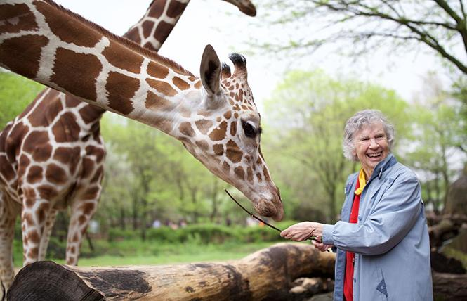 """Dr. Anne Innis Dagg with a long-necked friend in director Alison Reid's """"The Woman Who Loves Giraffes."""" Photo: Zeitgeist Films"""