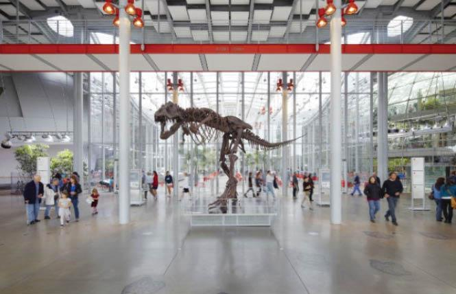 Museum at Home with the California Academy of Sciences