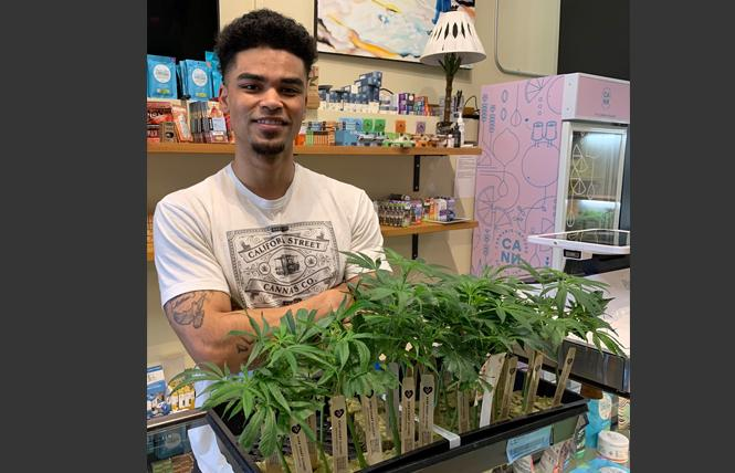 Drakari Donaldson of California Street Cannabis shows some of the starter plants, or clones, that are available at the San Francisco store. Photo: Sari Staver