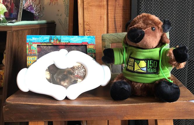 A plush baby bison, right (next to a photo of Enzo the dog), is one of several items people can purchase to celebrate Golden Gate Park's 150th anniversary. Photo: Matthew S. Bajko
