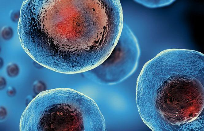 Funding for stem cell research is on the November ballot. Photo: Courtesy Stanford University