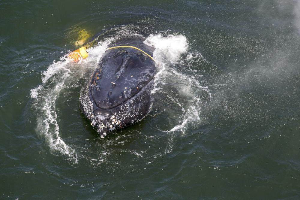marine protection