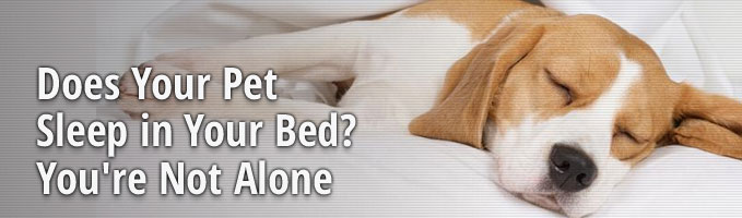 Does Your Pet Sleep in Your Bed? You're Not Alone