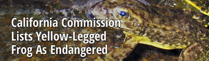 California Commission Lists Yellow-Legged Frog As Endangered