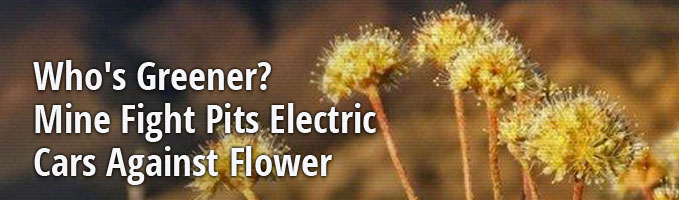 Who's Greener? Mine Fight Pits Electric Cars Against Flower