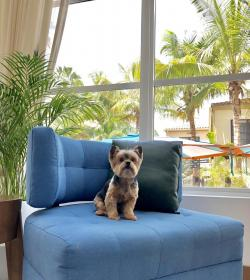 Edge Media Network 3 Pawsome Pet Friendly Hotels