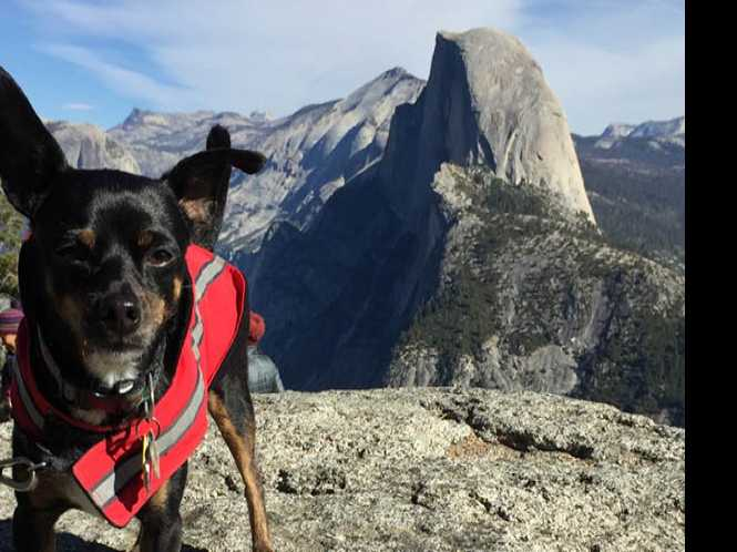Yosemite area offers a dog-friendly retreat