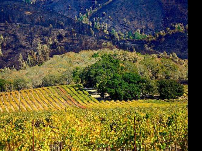 Sonoma recovering a year after fires