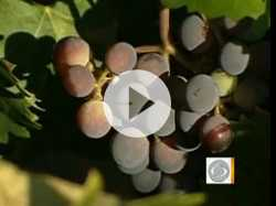 Climate Change Could Shift Wine Production North