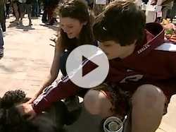 Therapy Dogs Boston Bombing Victims