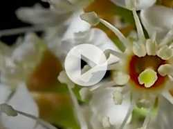 Time Lapse: The Wonders of Plants and Flowers