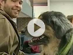 Students Say Dogs Just What the Doctor Ordered