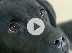 Service Dogs are Lifeline for Many in Need