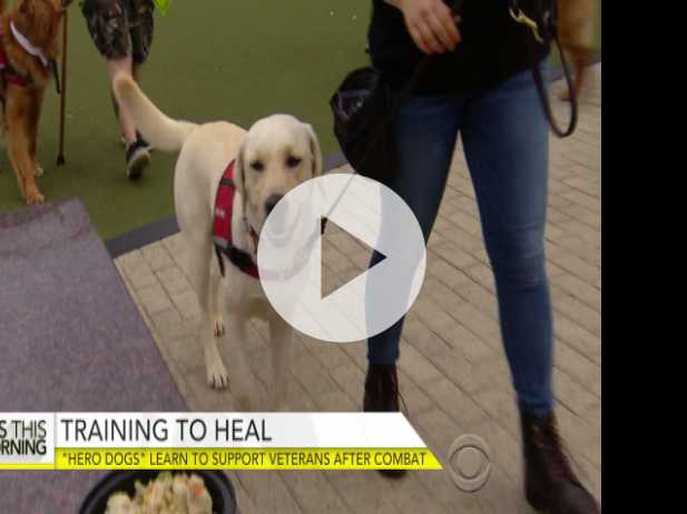 """Hero Dogs"" Trained to Help Disabled Vets"