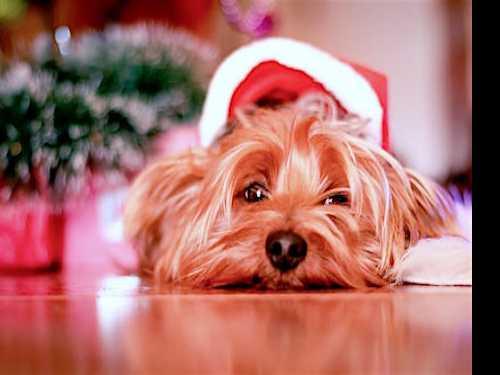 5 Tips to Keep Pets Stress-Free This Holiday Season