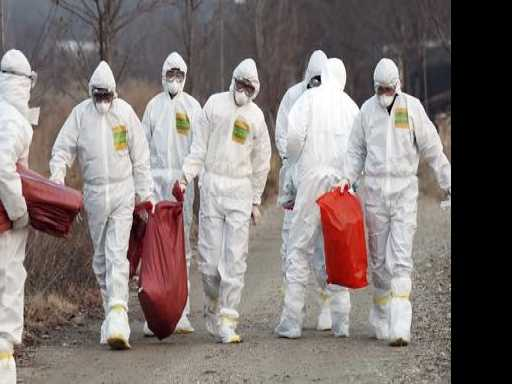 South Korea Cancels New Year Celebrations Due to Bird Flu