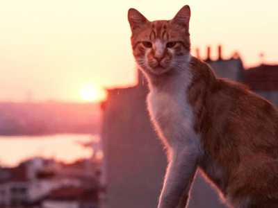 Review :: Kedi