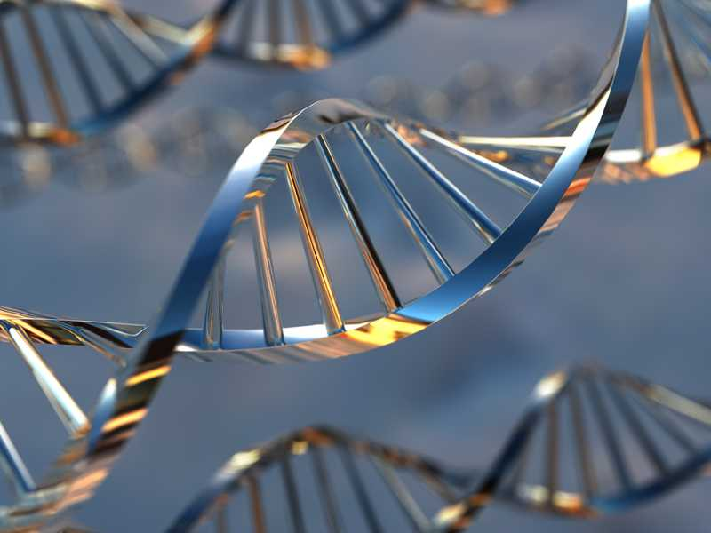 Could Gene Editing Help Avoid Disease? Maybe