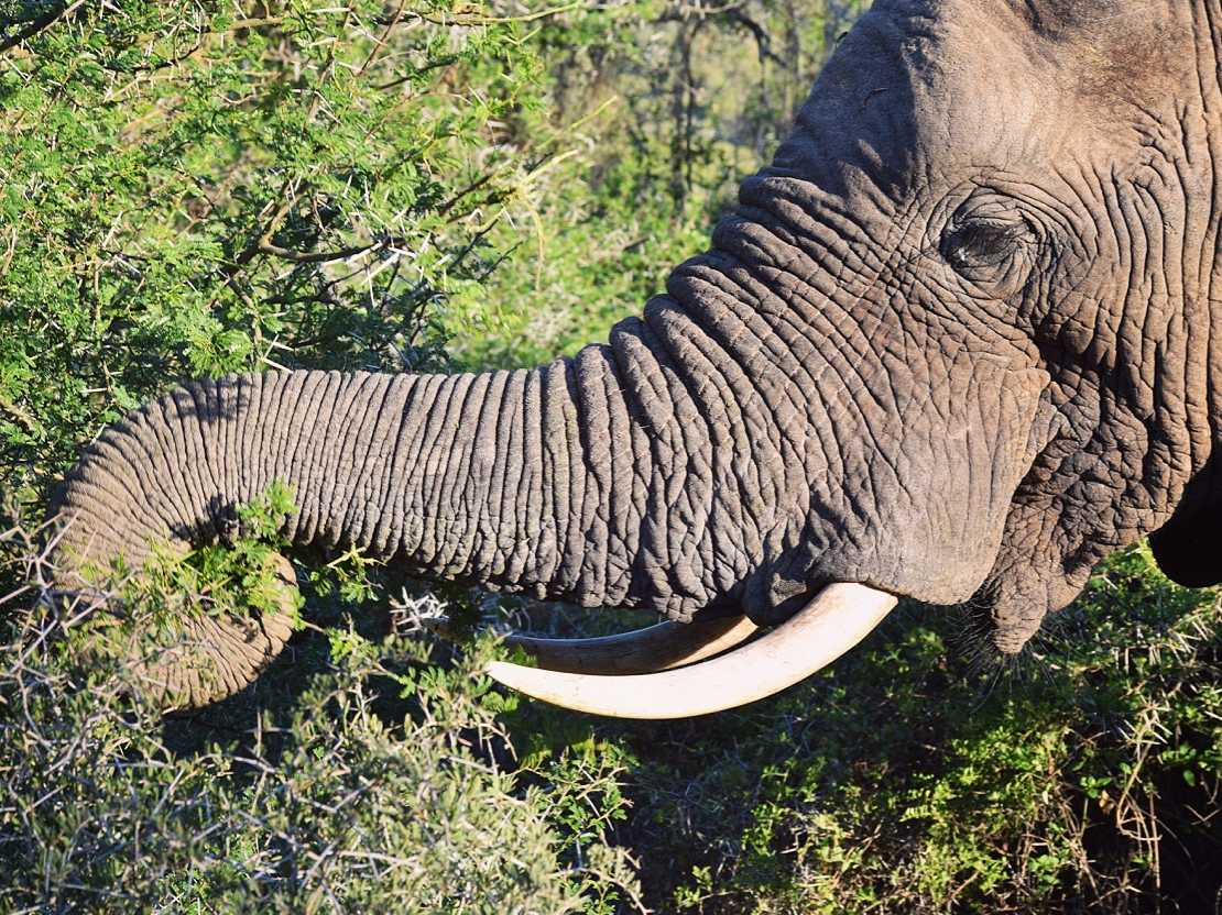 6 Tips For Booking a Travel Safari