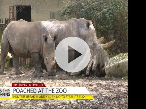 Poachers Break Into French Zoo and Kill Rhino to Steal Tusk