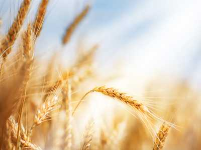 Eight Simple Steps to Retrain Your Body to Digest Wheat Again