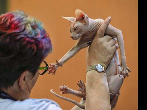 Slobbery Kisses: Romania Hosts Exotic Pet Show