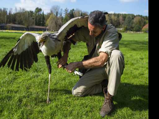 Secretary Bird at German Park Gets New Leg from 3-D Printer