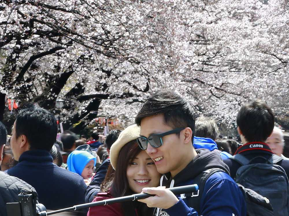 Cherry Blossoms Lure Admirers Around Northern Asia