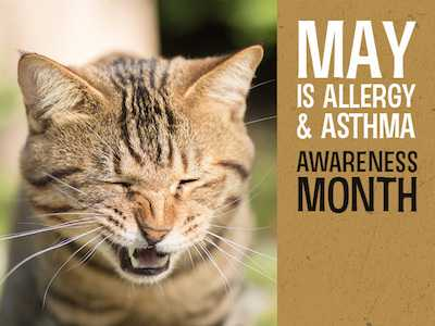 In May, National Asthma and Allergy Awareness Month, Could Furry Friends Be the Key to Beating Allergies?