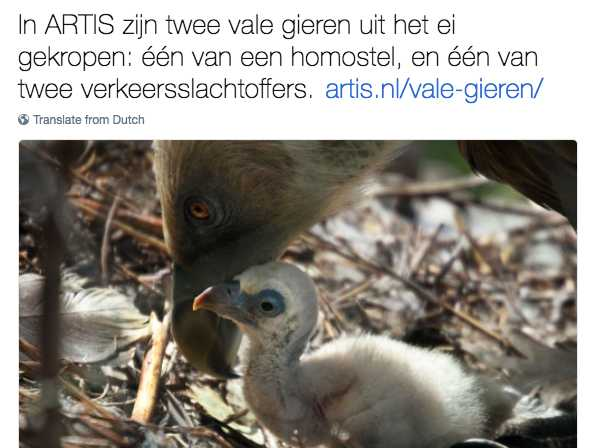 Gay Vulture Dads Hatch Chick at a Zoo in Amsterdam