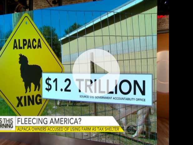 Alpaca Owners Accused of Using Farms for Tax Breaks