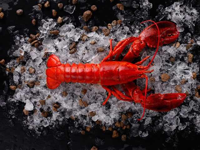 Scientist: Baby Lobster Count Drops Off U.S. Coast, Canada