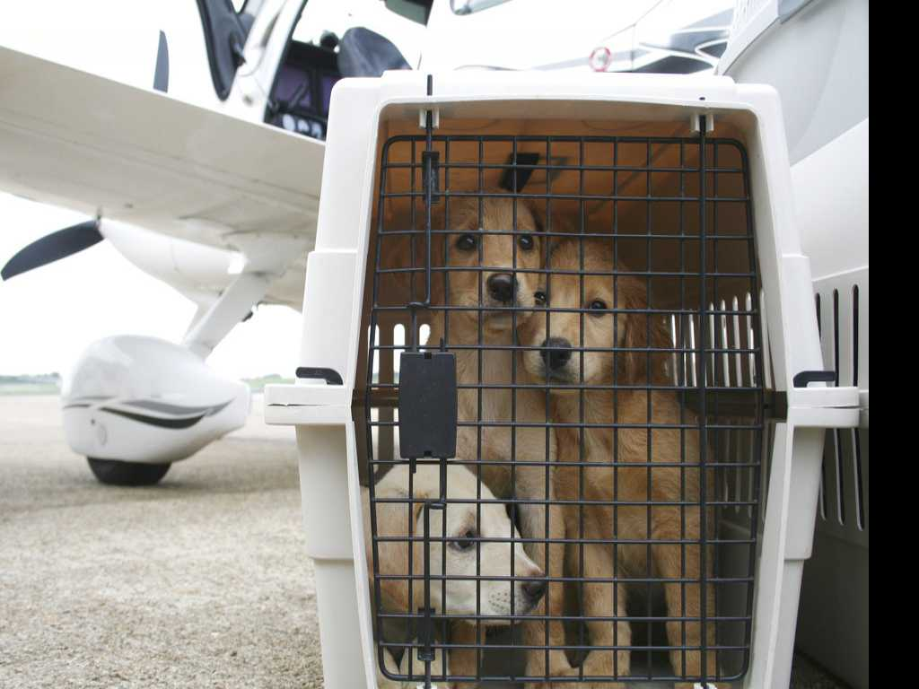 How to Make Plane Trips Easier on Pets, Owners Too