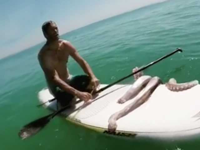 Watch: Paddle Boarder Encounters Giant Squid in Eye-Popping Video