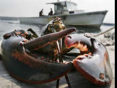 20-Pound Lobster Found in Luggage at Boston Airport