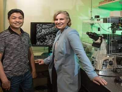 Salk Scientists Solve Longstanding Biological Mystery of DNA Organization