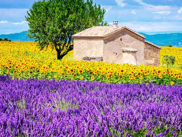 Never Mind April in Paris, Autumn in Provence is Perfect