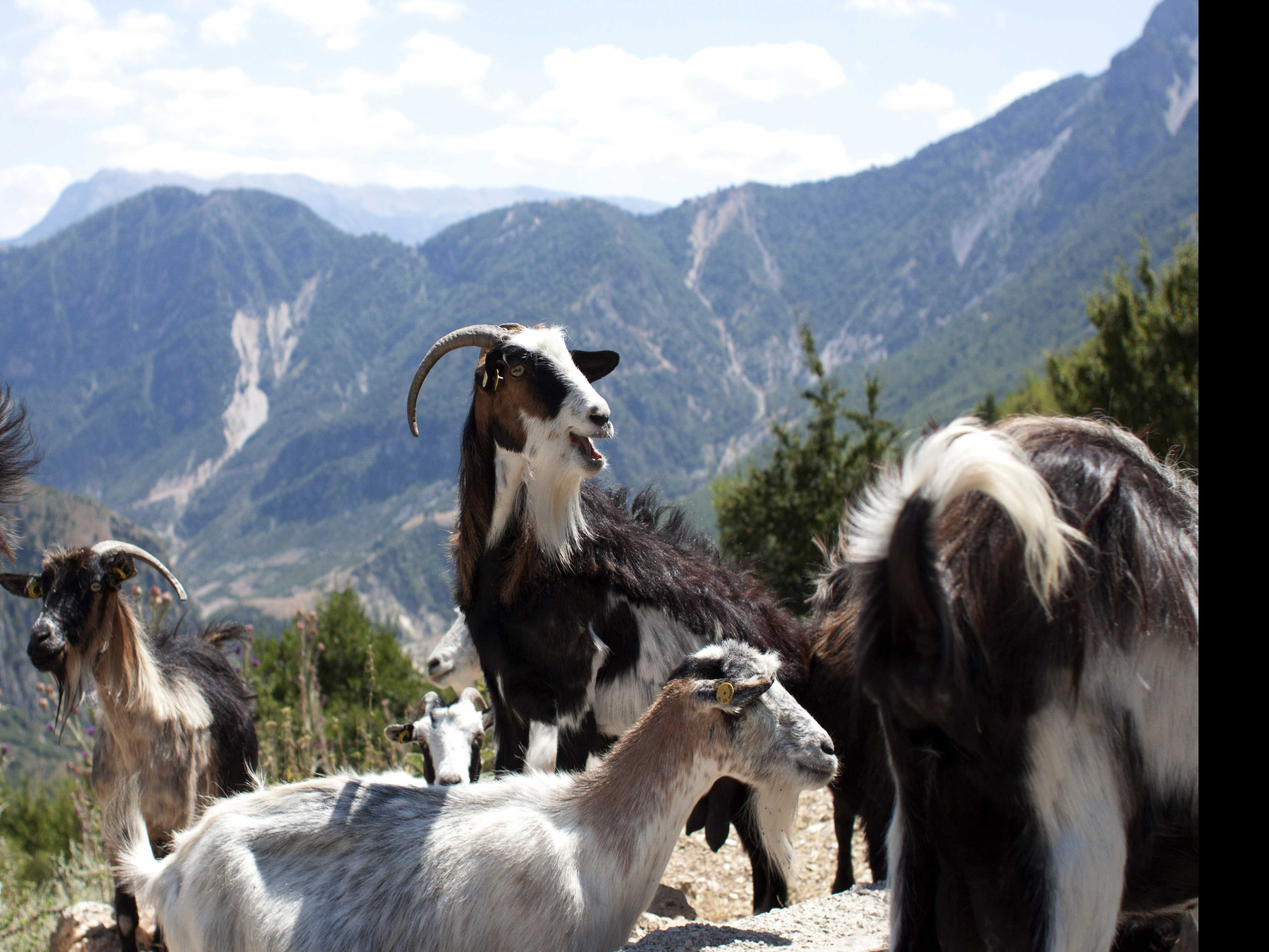 Project Aims to Attract Tourists to Remote Albanian Villages