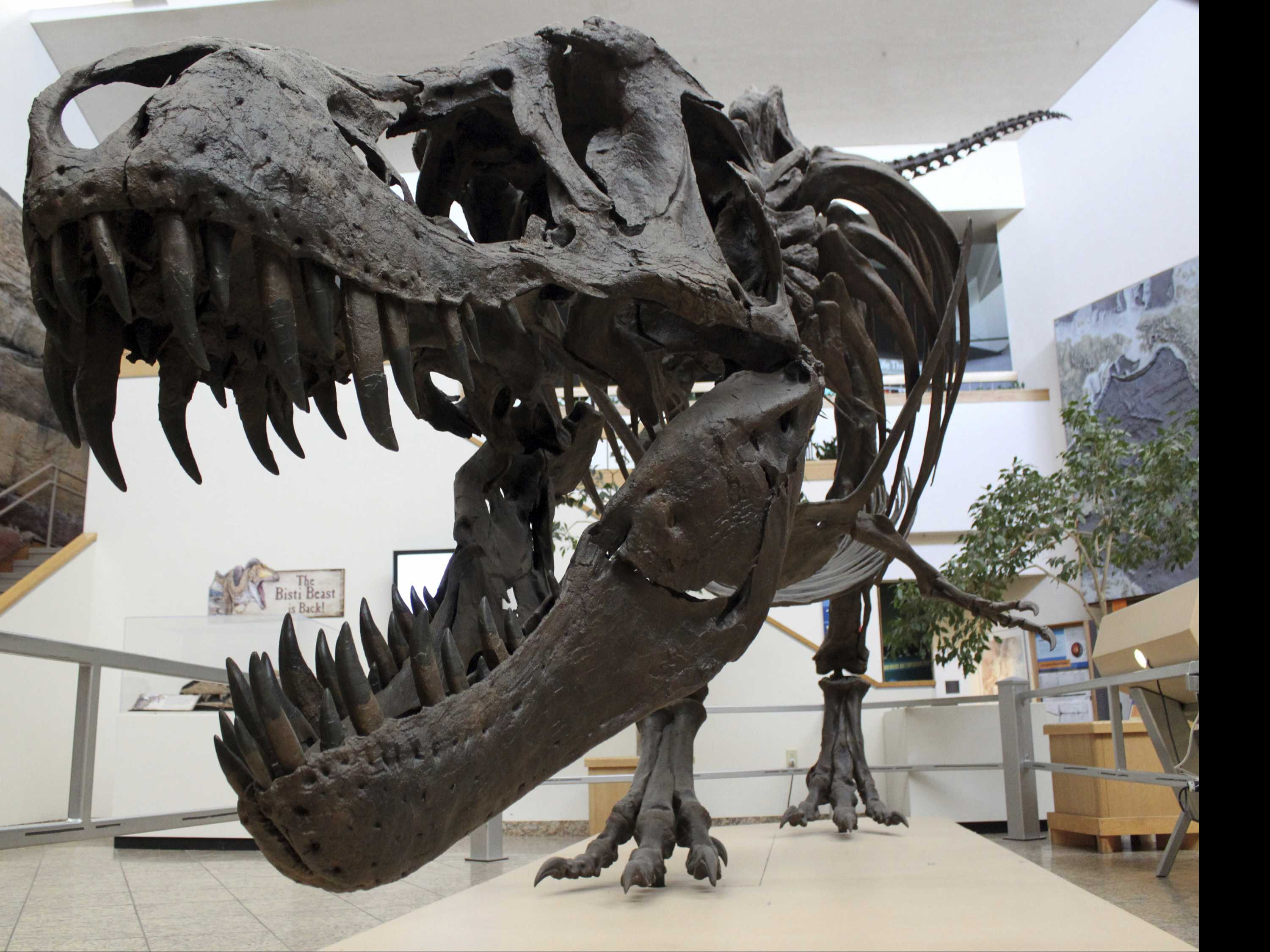 Neutron Beams, X-rays Reveal More About T. Rex Relative