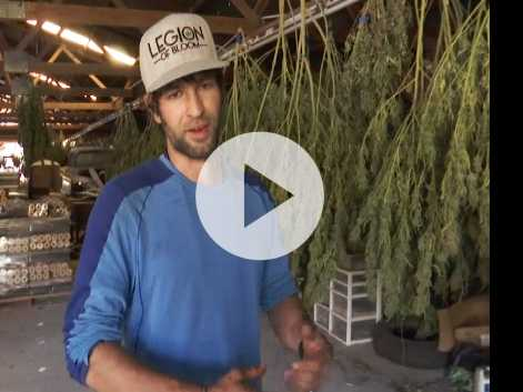 California Wildfires Scorch Marijuana Crops