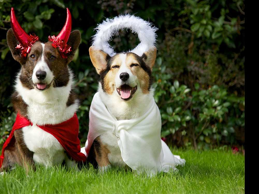 Five Tips to Make Halloween Happier for Pets