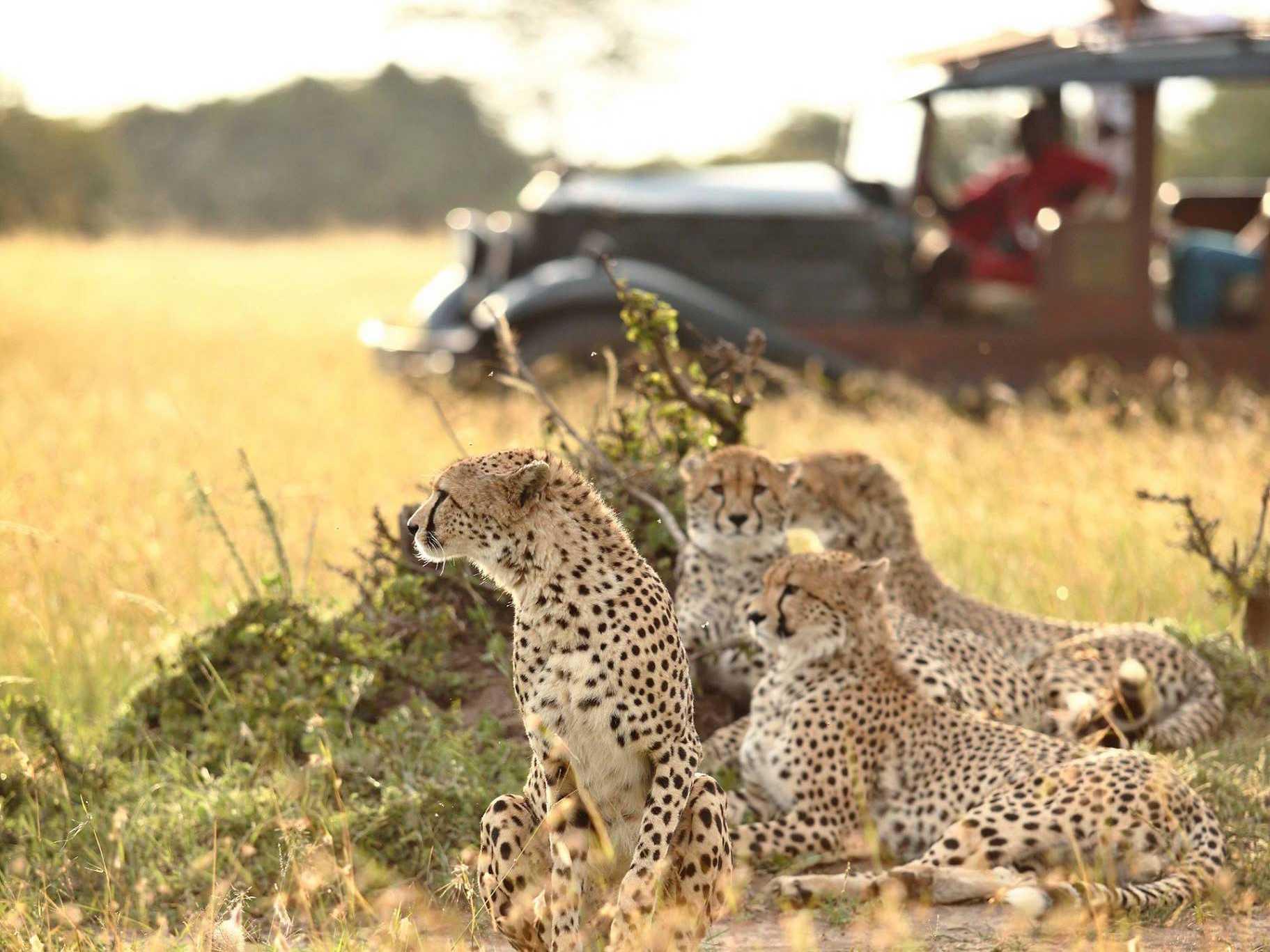 Watch: Wildluxe Misha Heads to Kenya