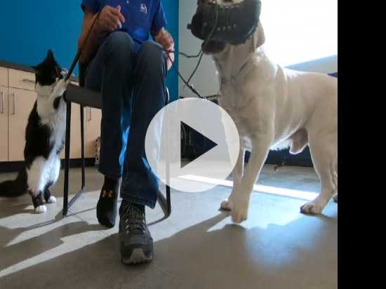 Cat Named D-O-G Is Star Trainer for Support Dogs