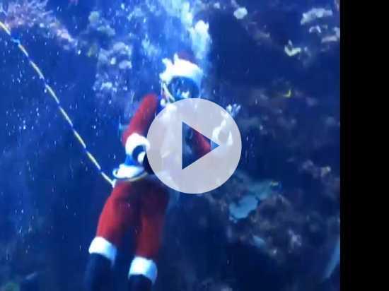 Scuba Santa Dives For Fun In Bay Area Exhibit
