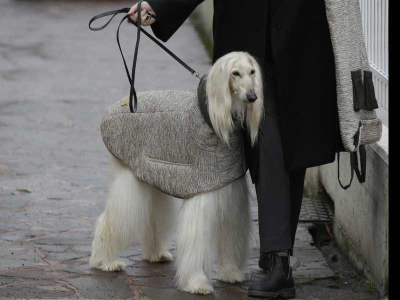 Canine Couture for Pampered Pooches