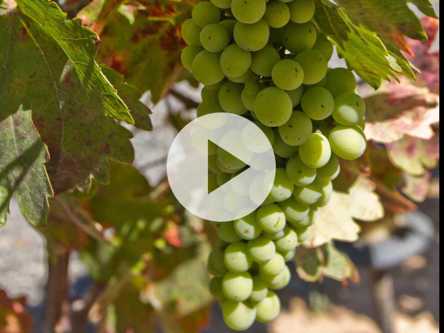 Watch: Wine Lovers & Foodies Flock to Valle de Guadalupe