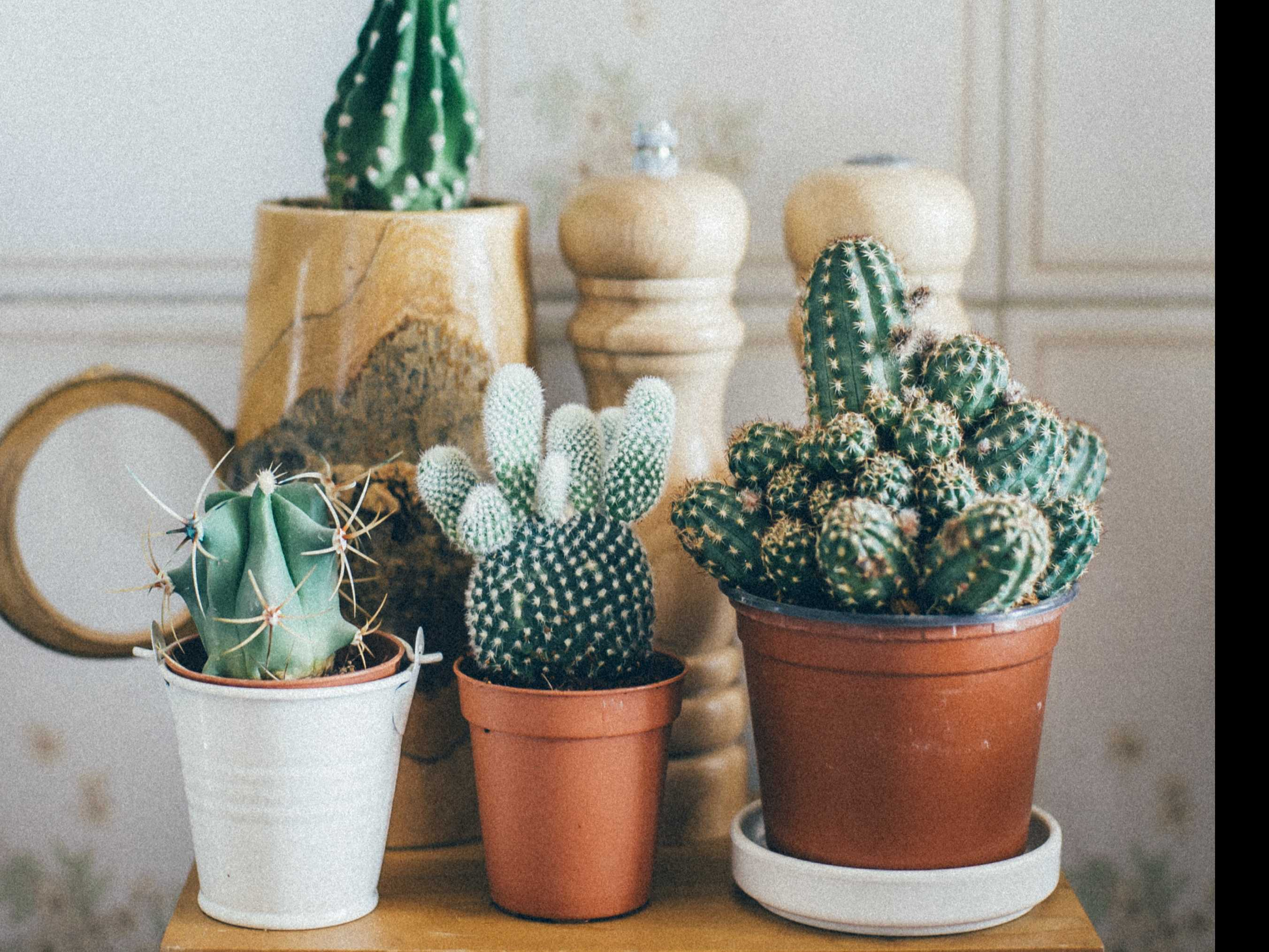 Gardening: Houseplants for the Horticulturally Impaired